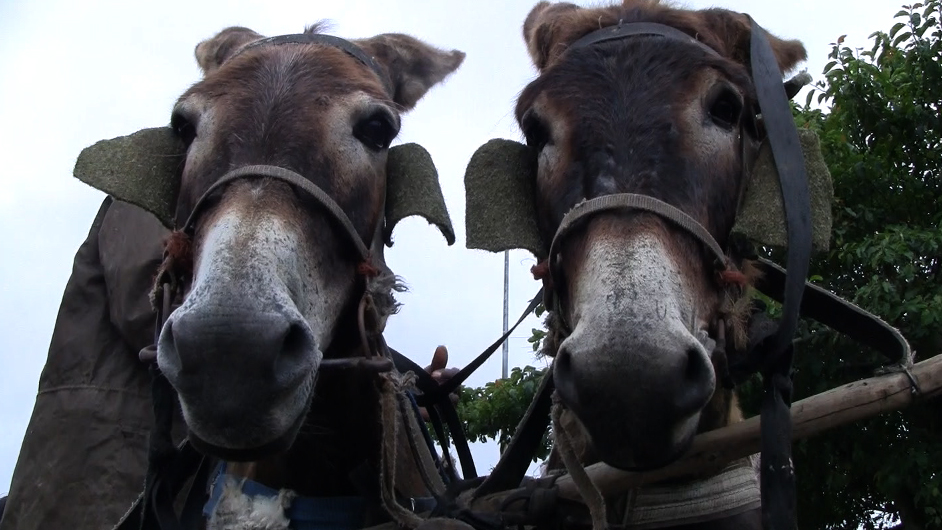 """Idonki!"" Donkeys play a vital role"